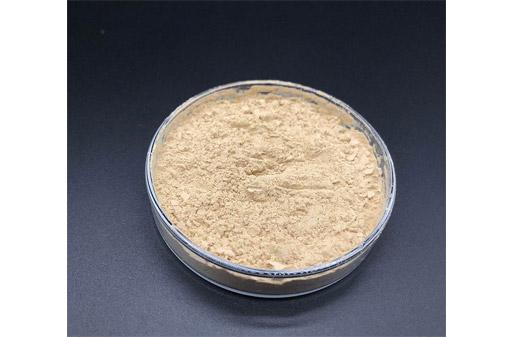 Bacillus Coagulans Accobio